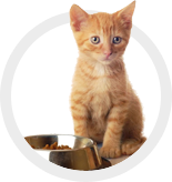 Cat Food/Cat Treats/Cat Toys